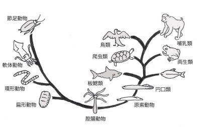 図3・生物は腸から始まった