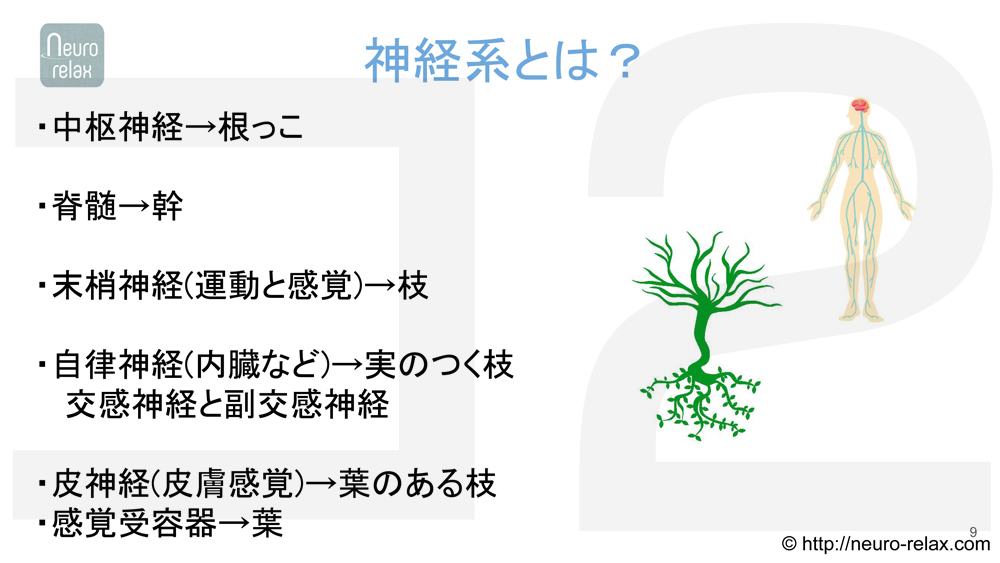 スライド1:神経系とは?