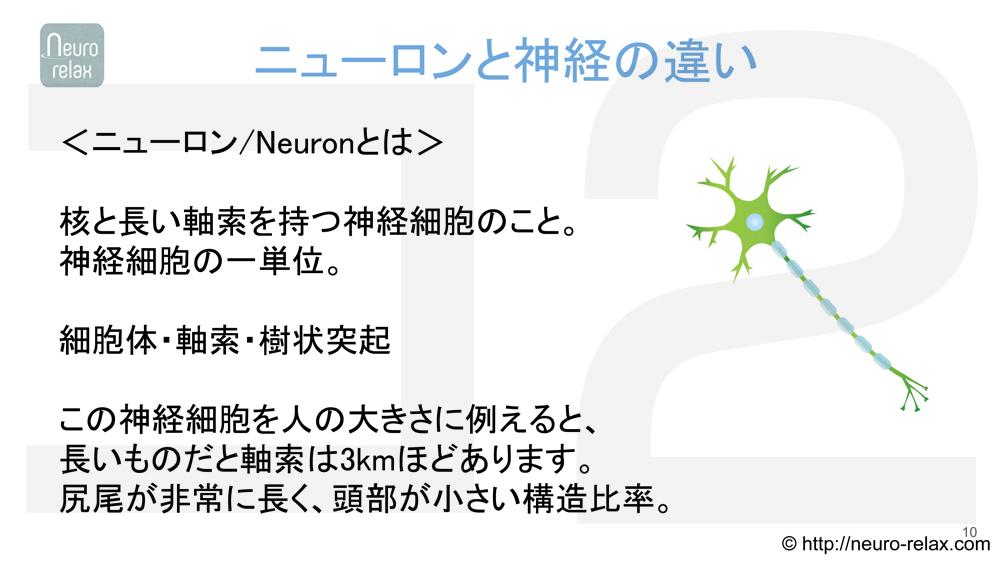 スライド2:ニューロンと神経の違い