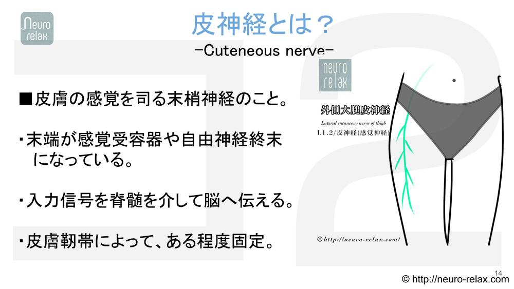 スライド5:皮神経とは?